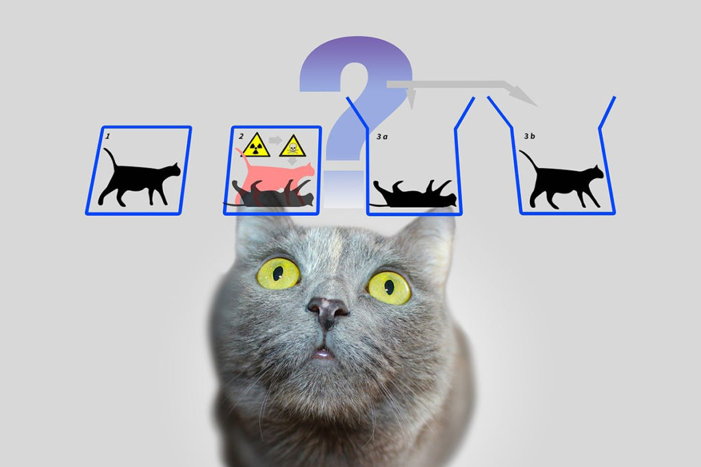 Kot Schrödingera o co w tym chodzi?